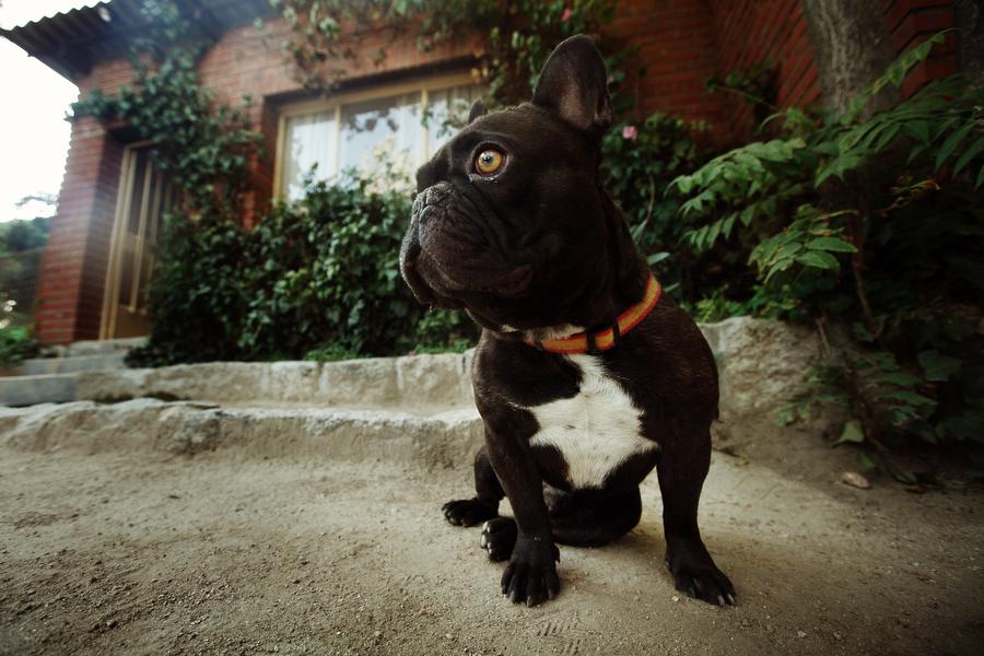 Residencia Canina Madrid El Tomillar