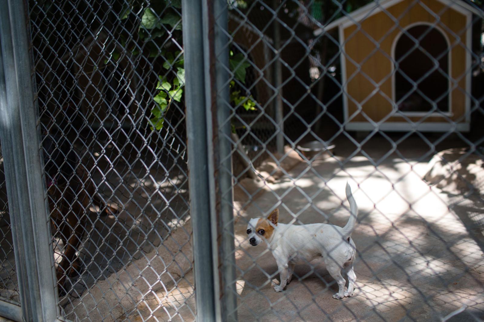 instalaciones caninas verano madrid 4